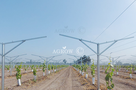 Vineyard Flat Gable Trellis System